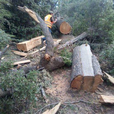 اقليم ميدلت: غابات تلفظ أنفاسها الأخيرة بسبب الاستغلال المشبوه بتونفيت